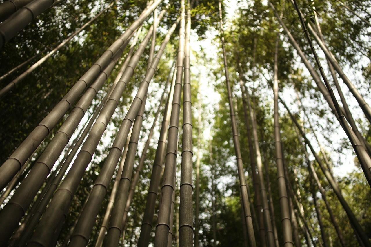 【日本京都】京都嵐山小火車三千院一日遊